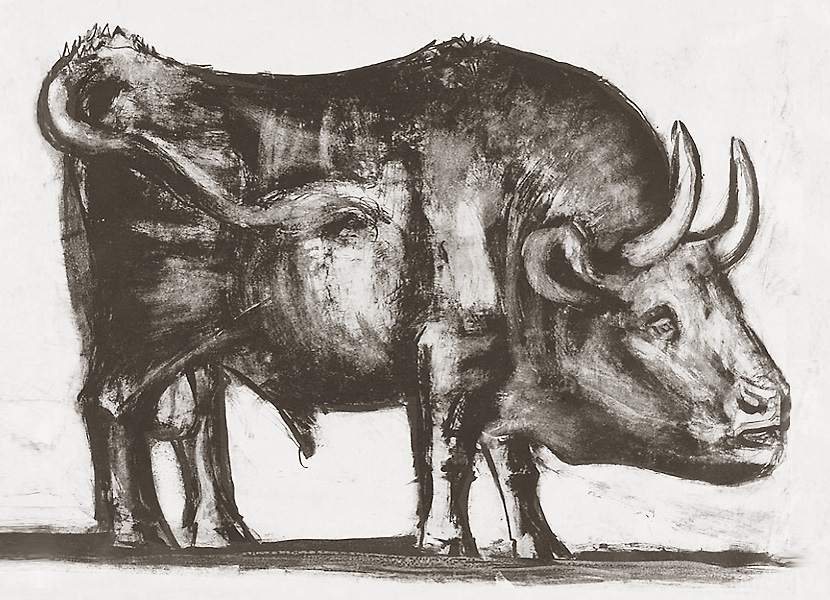 Картина Пабло Пикассо. Бык. Стадия 2. 1945, 12 декабря