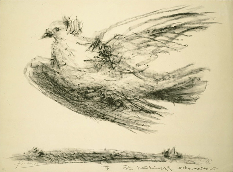 Картина Пабло Пикассо. Голубь в полете (Голубь мира). 1950